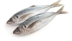 Horse mackerel(Aji)