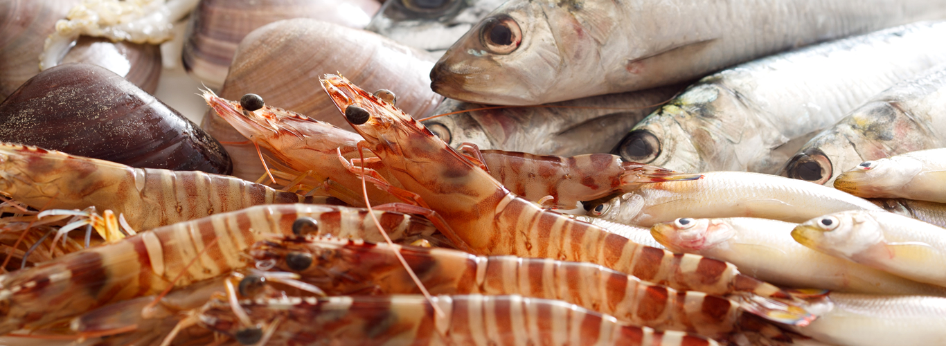 Umami Information by Food Seafood