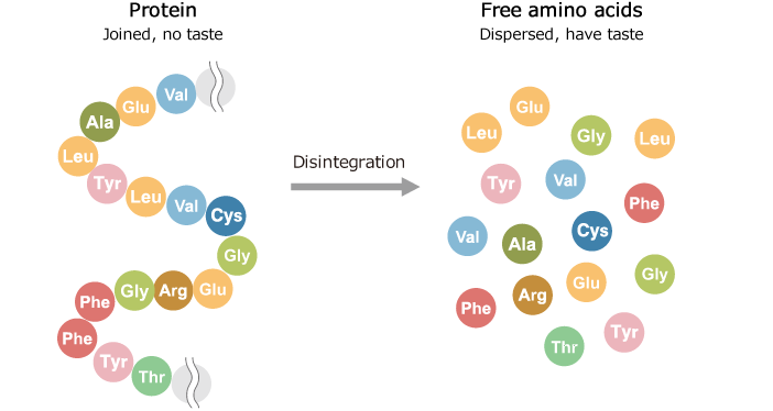 Connection between protein and free amino acids